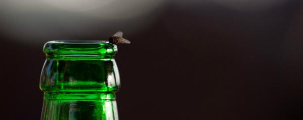Vliegen doen zich ook tegoed aan alcohol