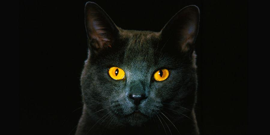 katten gele ogen