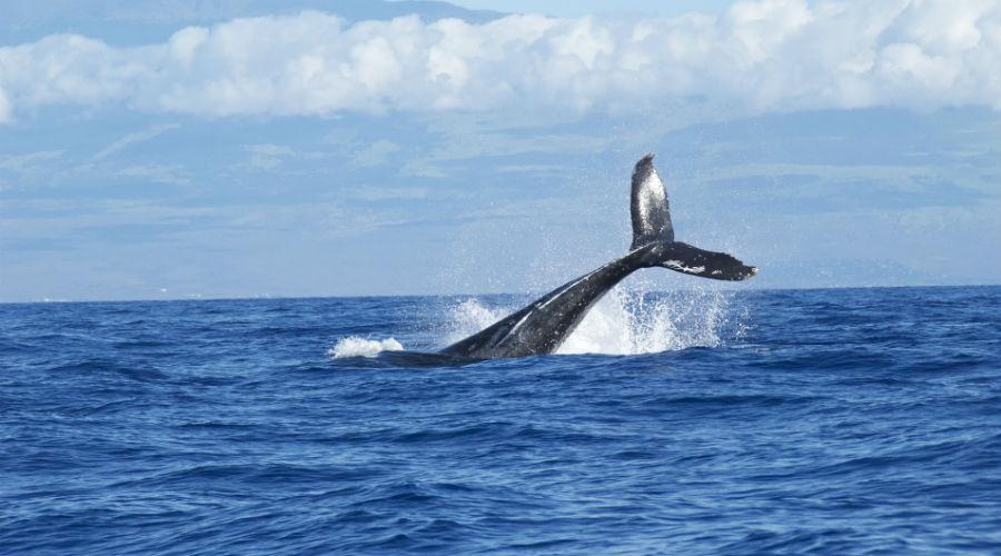 walvissenjacht