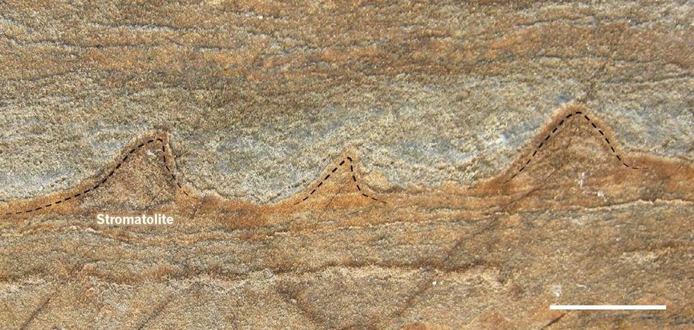 stromatoliet 2