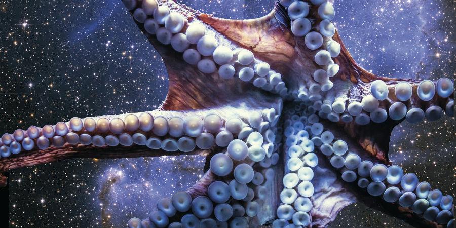 octopus octopussen