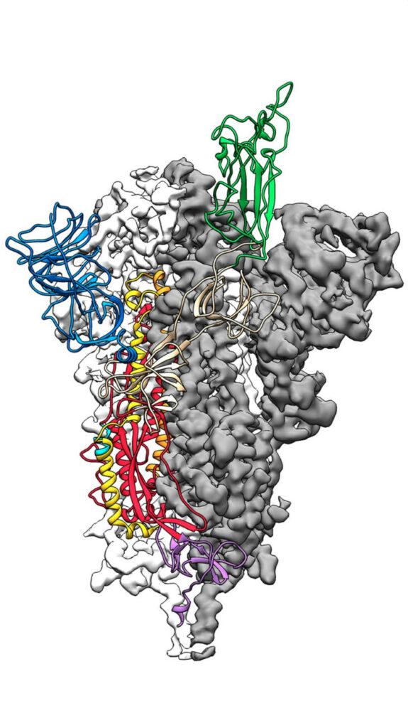 spike-eiwit coronavirus