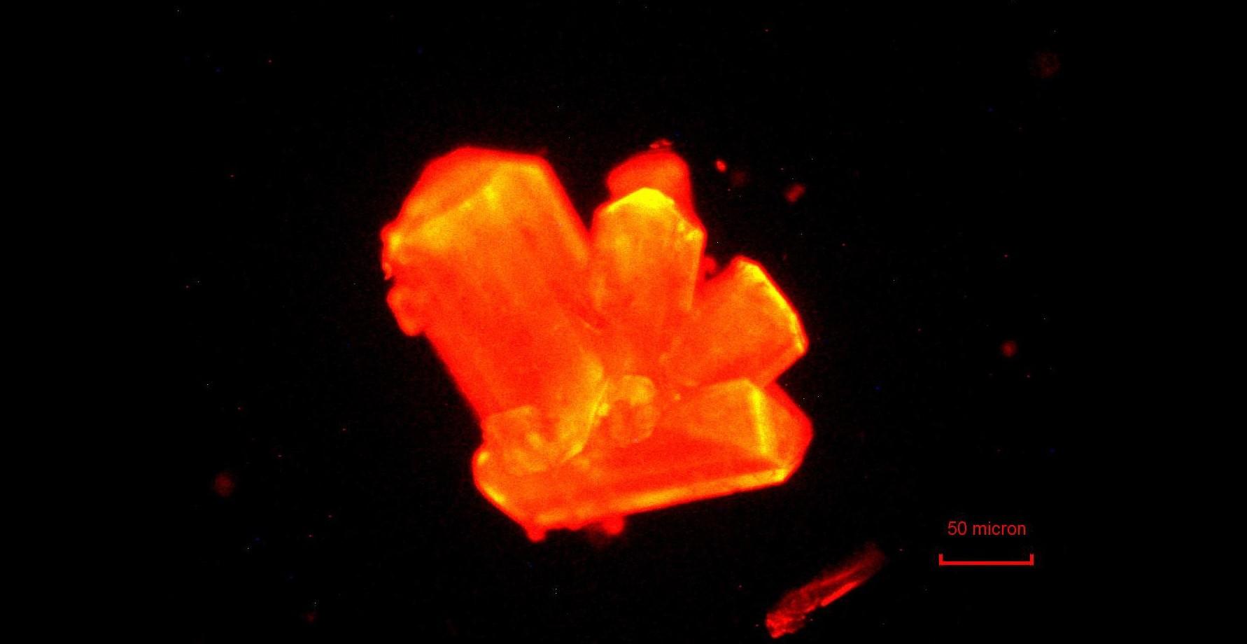 curium zware elementen